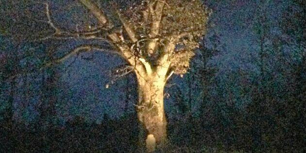 Upplyst ek i mörka vintertiden