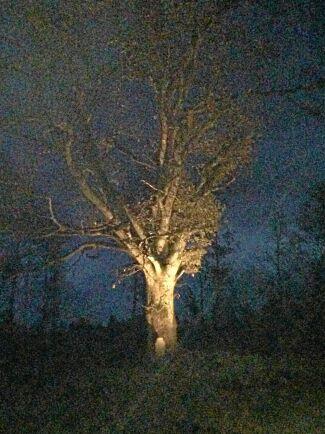 Veckans skogsbild kommer från Krogsered i Hallands inland.
