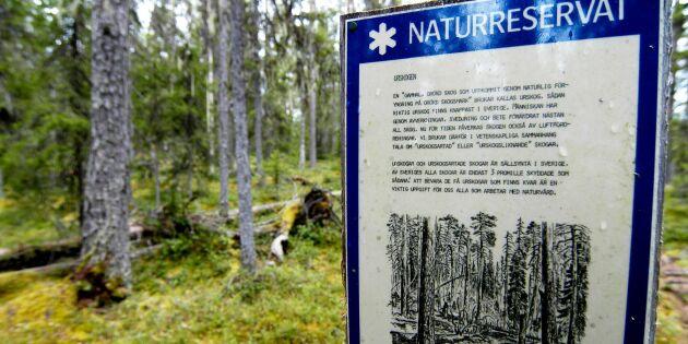 Svårt att kartlägga svenskt skogsskydd