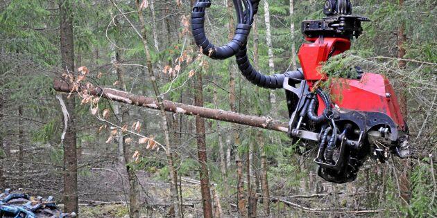 SLU föreslår ny referensnivå för skog – med lägre avverkning