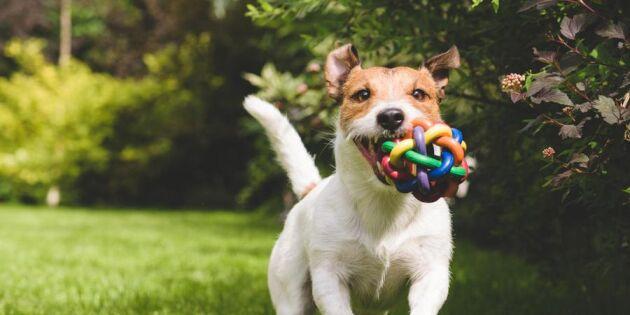 Aktivera mera – 5 roliga övningar för dig och din hund
