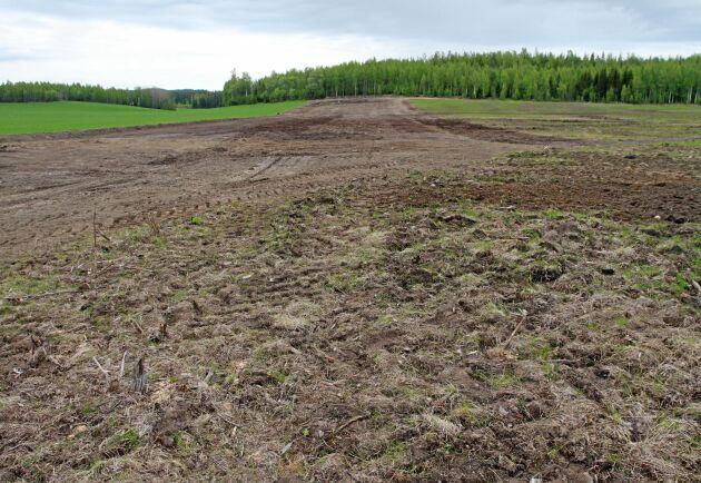 Den 28 maj i år och ett av de uppodlade fält som gjorts i ordning för sin första gröda efter 60 år i vila.