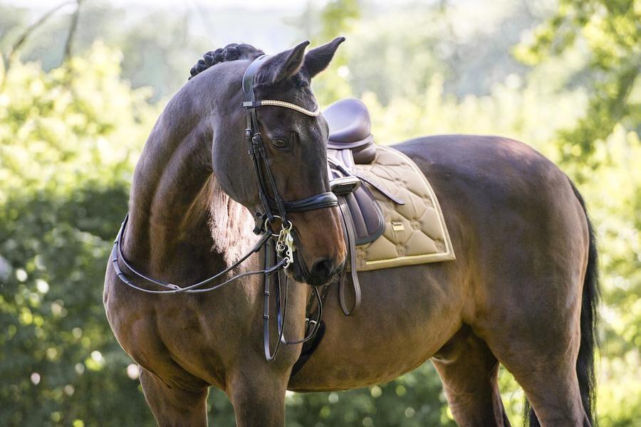 Idén bakom Karin Bjärles hästutrustning är att den ska vara helt anatomisk.
