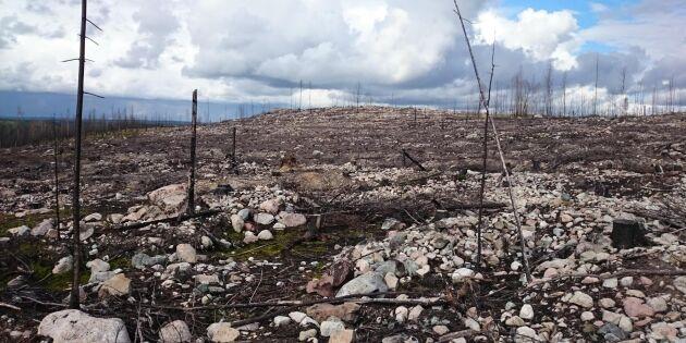 Stora Enso vann brandtvist – slipper betala försäkringsbolag