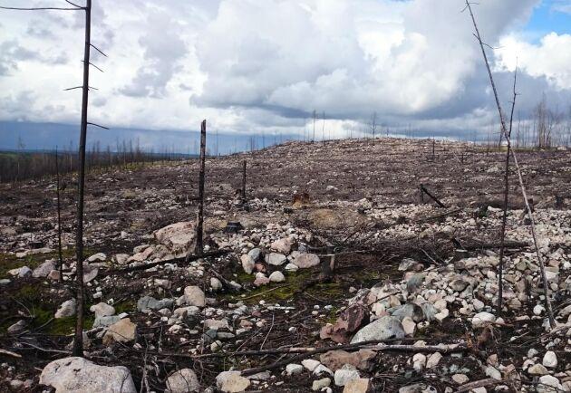 Försäkringsbolagen hävdade att den gnistbildning och de bränder som kan uppstå vid markberedning borde medföra ett skadeståndsansvar.
