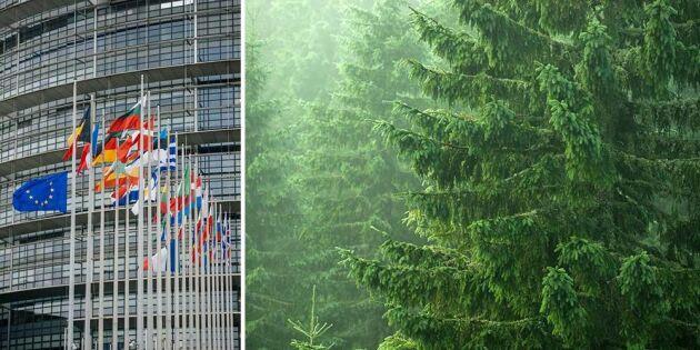 Seger för skogen i EU-parlamentet