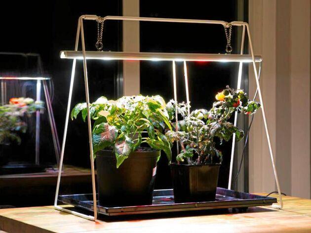 Växtbelysning: Råden till dig som vill köpa eller bygga ...