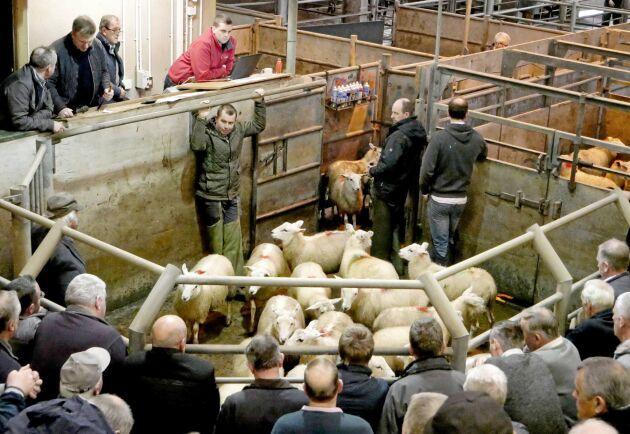 Fårbönderna kan bli de som drabbas mest av en hård gräns mellan Nordirland och Irland. Den blir den enda landsgränsen mellan Storbritannien och EU och är därför en väldigt debatterad fråga.