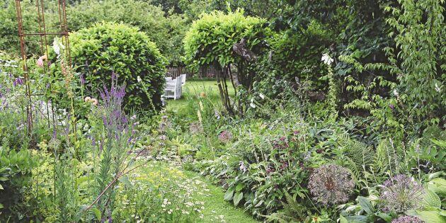 Expertråd: Så skapar du en hållbar trädgård – där humlor och bin stormtrivs