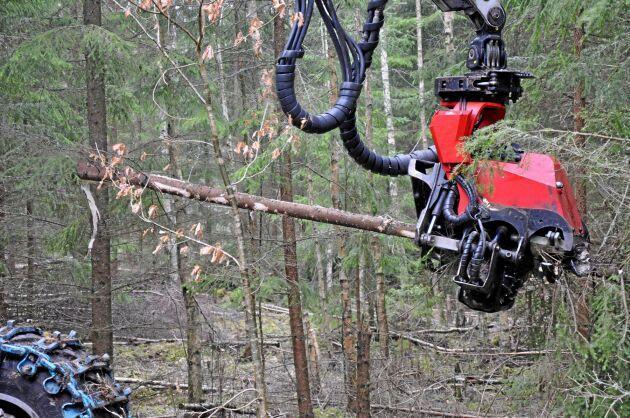 Att köra ofta med maskiner i skogen för att ta ut enstaka träd leder till ökade risker för körskador med röta och vindfällen som följd, menar debattören.