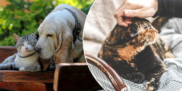 Nu är det bevisat – därför är det bra att klappa din hund eller katt
