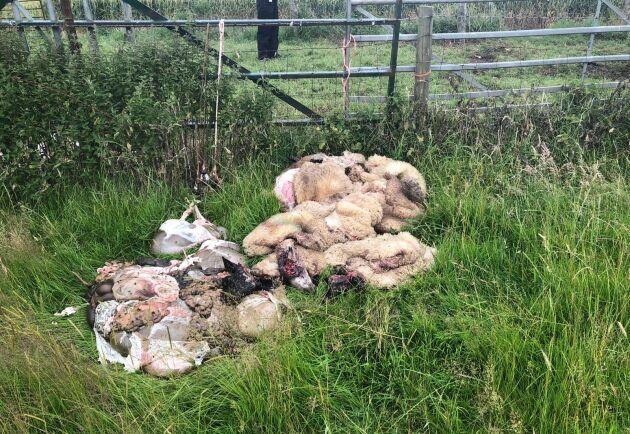 Slaktkroppar hängde från staketet när polisen kom fram, enligt uppgifter från Farmers Weekly.