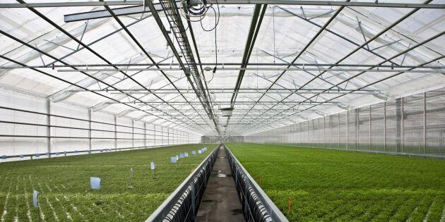 Svenska odlare drabbas av ny ekolag