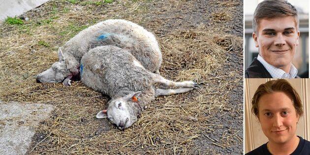 Skjut vargen och stoppa landsbygdens lidande