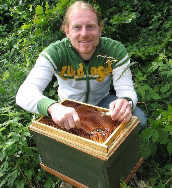 RENA MEDICINEN. Tobias Olofsson öser rent guld med sked. Innan bina gjort honungen helt klar och satt lock på cellerna i kakan innehåller honungen mjölksyrebakterier som kan bli ett levande antibiotika. Foto: ConCellae.