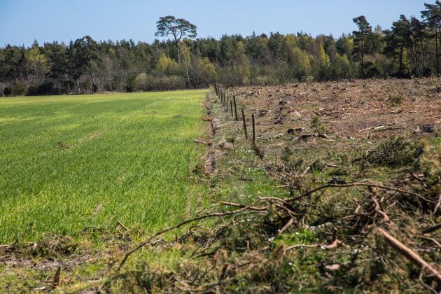 Skog blir åker. Nästan varannan hektar skog som avverkades gjordes om till odlingsmark under 2015 på Gotland.