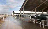 Europas största mjölkgård