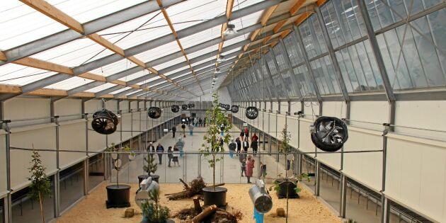 Här är Nederländernas modernaste hönsgård