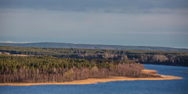 Bergvik Skog styckas