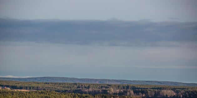 Finansiering behövs för fortsatt öppen skogsdata