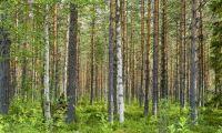 Här blir det fritt fram att avverka skog