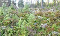 Länsförsäkringar bildar skogsbolag