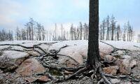 Miljonböter efter skogsbranden