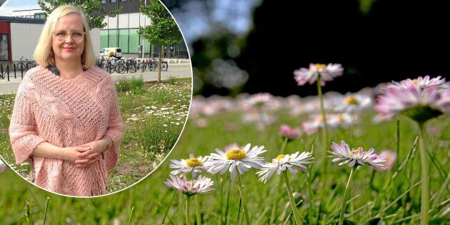 GUIDE: 4 blommande alternativ till gräsmatta – så gör du!