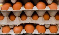 USA-ägg rekorddyra efter pandemirusning