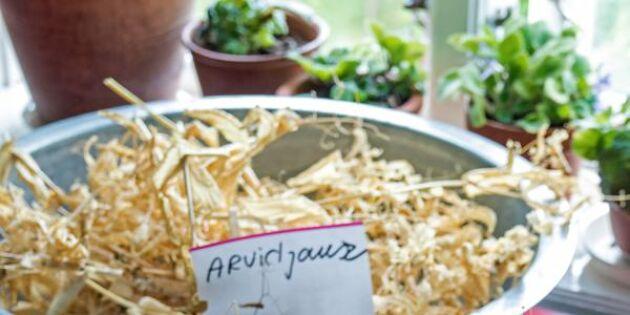 Potatislök och blå mandel: Karin odlar historiska sorter