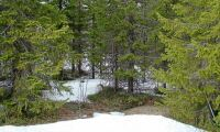 Osäkert om varmare klimat ger mer skog