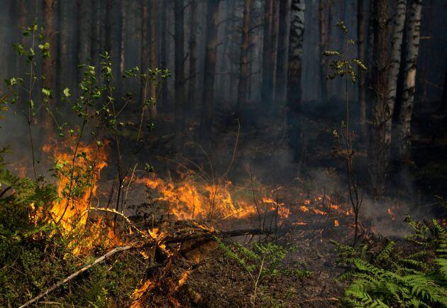 Arkivbild, Skogsbrand.