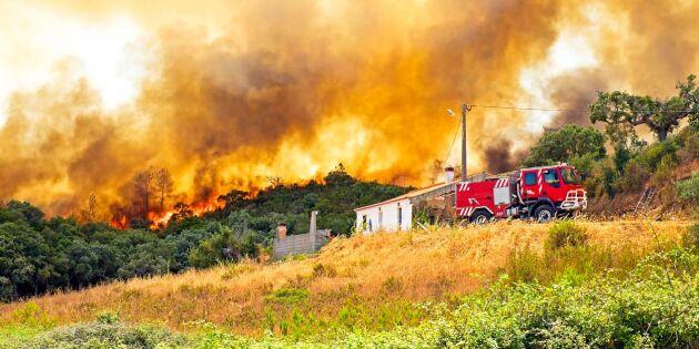 Skogsbränder härjar i Portugal