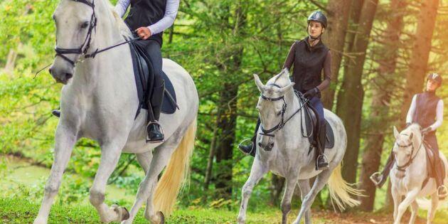 Så klarar du möten med hästar i trafiken – 4 säkra tips!