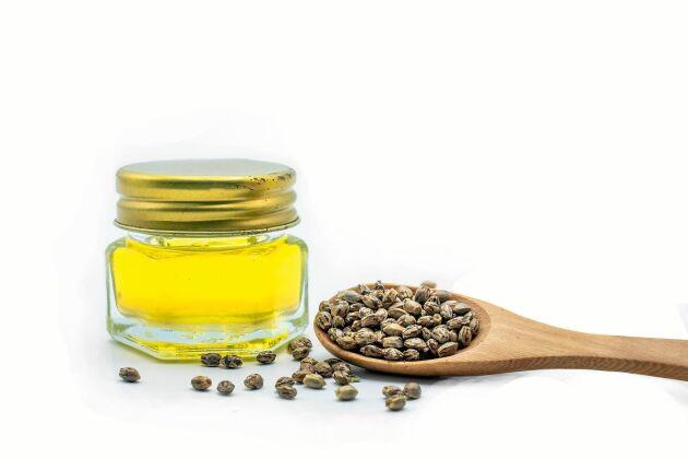 Hampfrön är rika på fullvärdiga proteiner och oljan på nyttiga fettsyor.