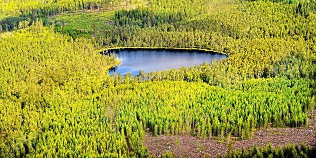 Lägre brandrisk – bättre läge för skogsbruk