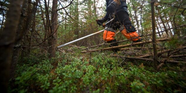 Virkesbörsen breddar med e-handel för skogsvård