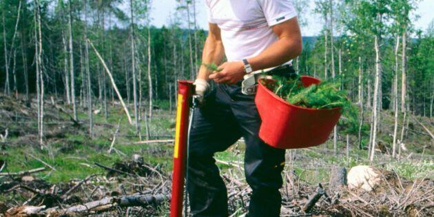 Satte världsrekord i plantsättning
