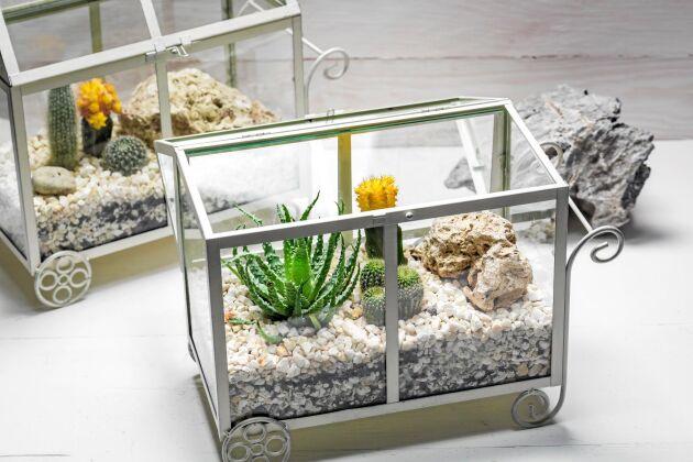 Kaktusar kan få bilda en egen liten öken. Marmorkross ger en ljus och fin plantering. Foto: Istock