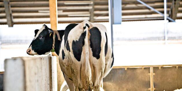 Färre än 4 000 svenska mjölkgårdar
