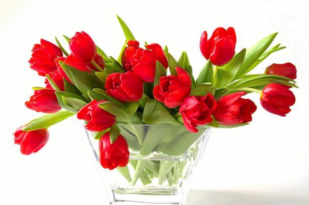 I den här vasen får tulpanerna bestämma själva. Glatt spret som är lika vackert när de åldras.