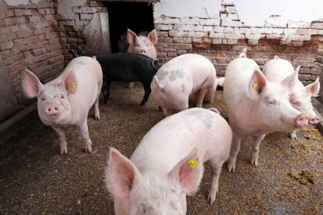 EU-parlamentet vill inför striktare regler mot antibiotika och samma krav på kött som importeras till EU.