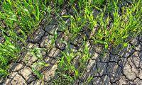 Så påverkar torkan jordarnas funktioner