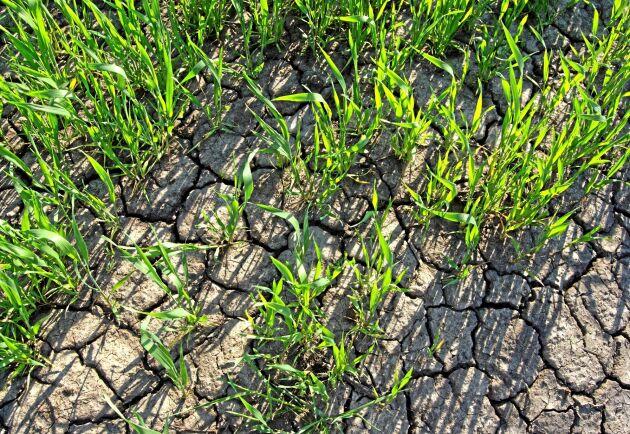 En ny studie, författad av forskare från flera länder i Europa, har undersökt hur jorden påverkas av extrem torka.