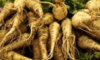 Brittisk sajt vill sälja ratade grödor