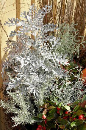 Silverek och silvergirland ger kontrast.