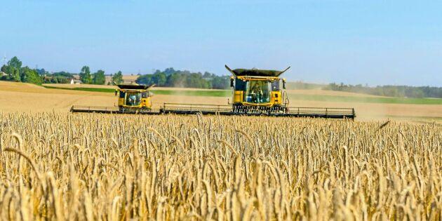 Nordiska länderna värst drabbade av torkan