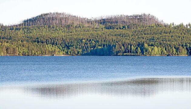 Från rastplatsen vid Inre Kroksjön kan man se skog som ingår i SCAs mångfaldspark Tjäderberget. De två bergen har bränts som en del av områdets naturvårdsskötsel.