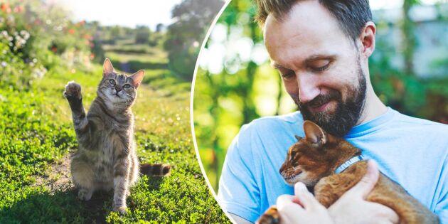 Så gör du om din katt springer bort – och förebyggande tips