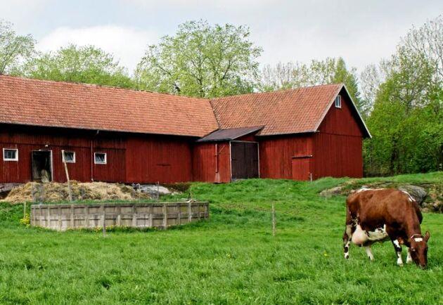 Att vara uppväxt på en gård kan ha stora fördelar.